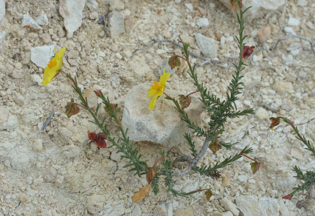 http://www.flora.hyla.es/Angiospermas/angiospermas.html